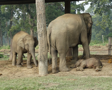 Elephant Breeding Center, Chitwan