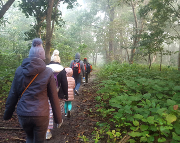Jungle Walk in Chitwan